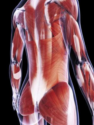 Faszientraining - Sportler Physiotherapie Frankfurt